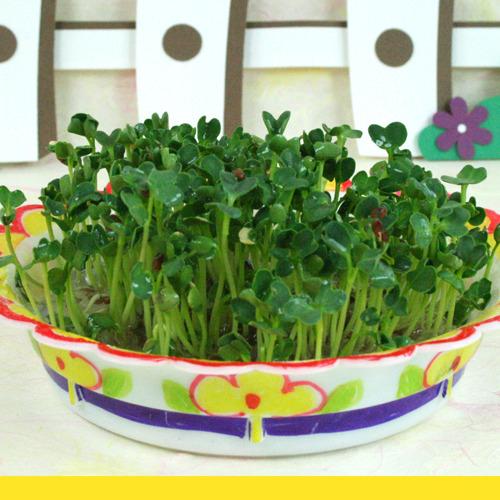 주제별 만들기 봄,식목행사,새싹 키우기,화분,식물키우기,새싹키우기,식물키우기,무순키우기,채소키우기