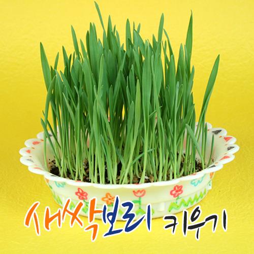 주제별 만들기 봄,식목행사,새싹 키우기,화분,식물키우기